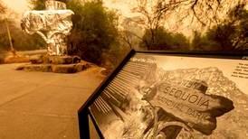 Kjempetrær pakkes inn i folie for å skjerme dem fra skogbrann i California