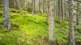 Advarer mot treplanting som sovepute for klimatiltak: – Blir for mange en enkel vei ut
