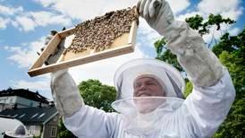 Bismak av himmel: Kirkelig fellesråd i Oslo satser på honning