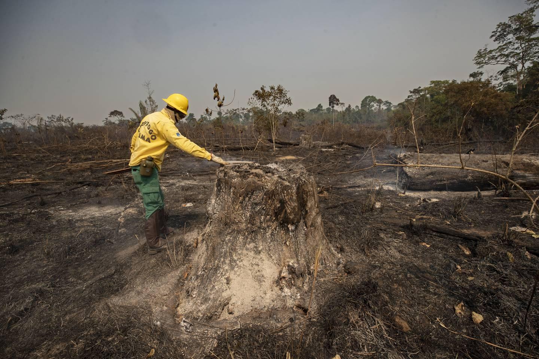 VIPPEPUNKT: En ansatt fra det offentlige miljøbyrået IBAMA legger en hånd på et tre i et området som ble slukt av flammer i august i fjor. Skogbrannene i regnskogen Amazonas har økt i omfang de siste årene, og dytter skogen mot et vippepunkt der den kan forsvinne.