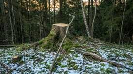 Trærne som stod her, var anslått å være 117 år