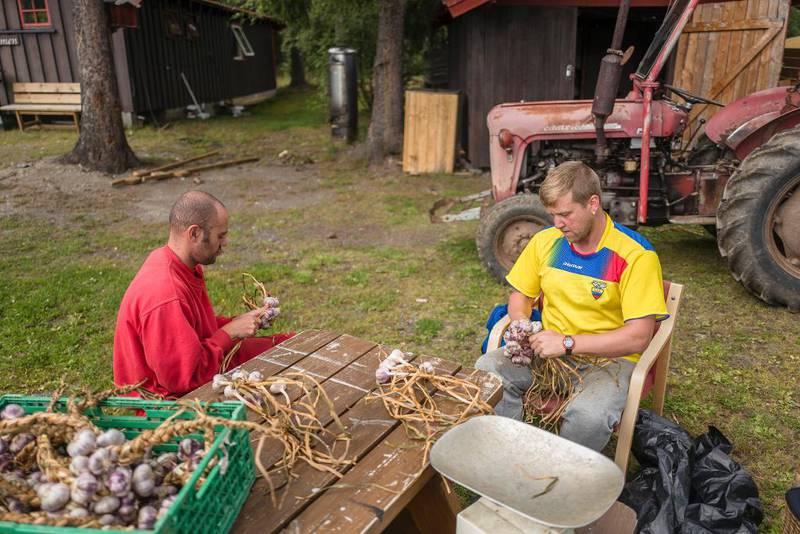 Rafael Barros da Silva Matos og Steinar Holshagen Bjørnestad fletter hvitløk som skal selges på markedet i Fagernes. Fangene er aktive