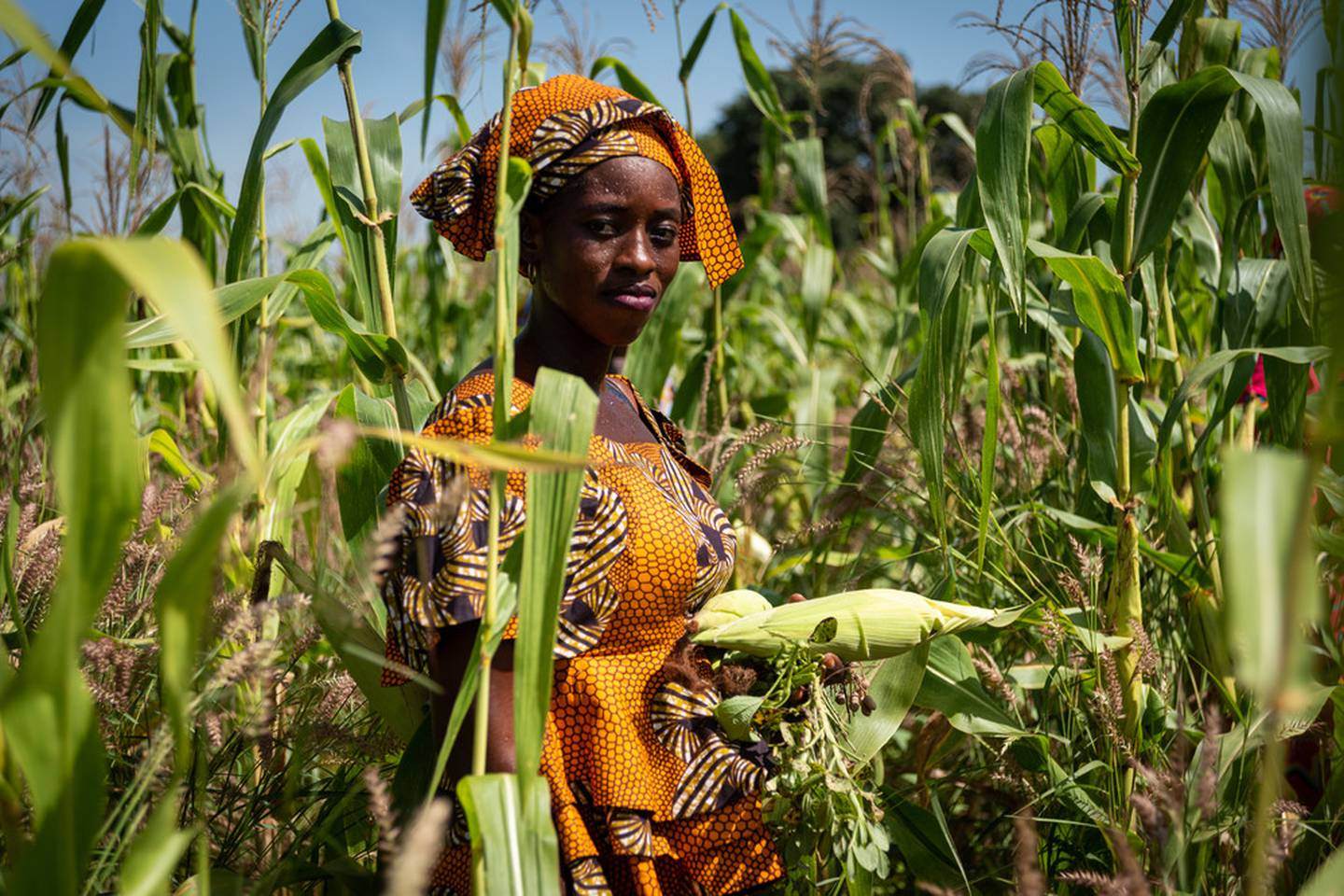 Senegal Agricultural Value Chain Support Project (PAFA) by IFAD