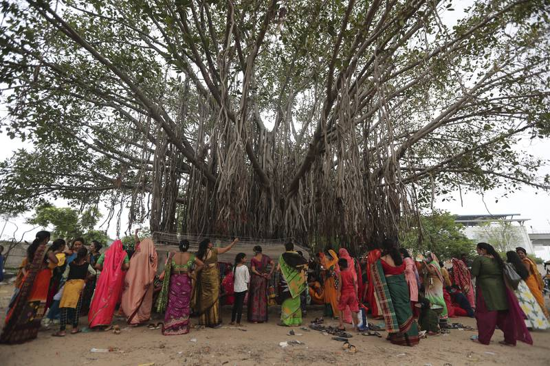 Married Hindu women perform rituals around a Banyan tree on Vat Savitri festival in Ahmedabad, India, Thursday, June 24, 2021. Vat Savitri is celebrated on a full moon day where women pray for the longevity of their husbands. (AP Photo/Ajit Solanki)