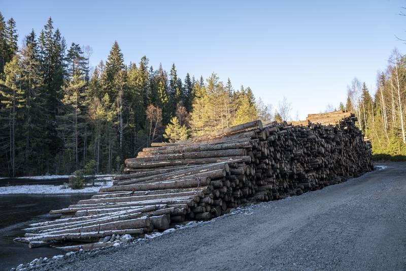 TØMMERET: Langs veien inn mot hogstfeltet ligger tømmeret fra hogsten i høst i fine stabler.