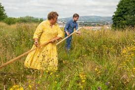 Ny tiltaksplan for å redde humler og bier