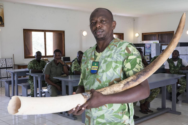 Teamet av EcoGuards følger med på hvor skogelefantene i Gabons regnskoger beveger seg, for å hindre at de blir skutt og drept av jegere som er ute etter elfenben. Gabon har en stor andel av de skogelefantene som fortsatt finnes i verden. De er også viktige for å ta vare på regnskogen, som igjen er viktig for livsviktig regn i andre deler av Afrika. EcoGuards støttes av det norske klima- og skoginitiativet, NICFI. Norad.