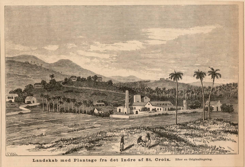 Ein sukkerplantasje på øya St. Croix. Dei dansk-norske slaveøyane i Karibia produserte sukker som blei segla heim til Danmark og Norge.
