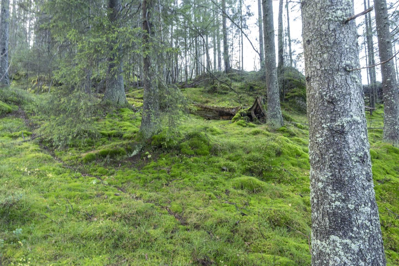 Skog på Fjerdingbyhøgda i Rælingen, ved Marikollen skianlegg