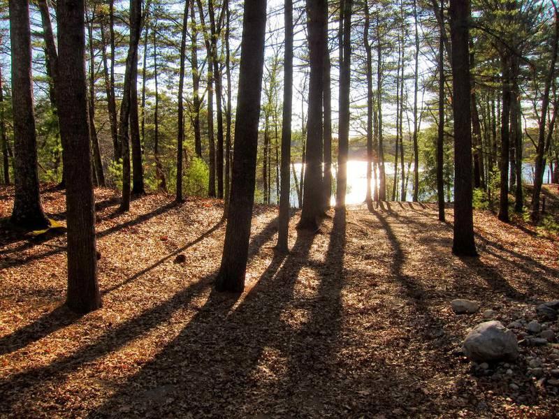 Vandringene i skogene rundt Walden la grunnlaget for Henry David Thoreaus naturfilosofiske betraktninger. Boka Til naturen kommer i disse dager på norsk.