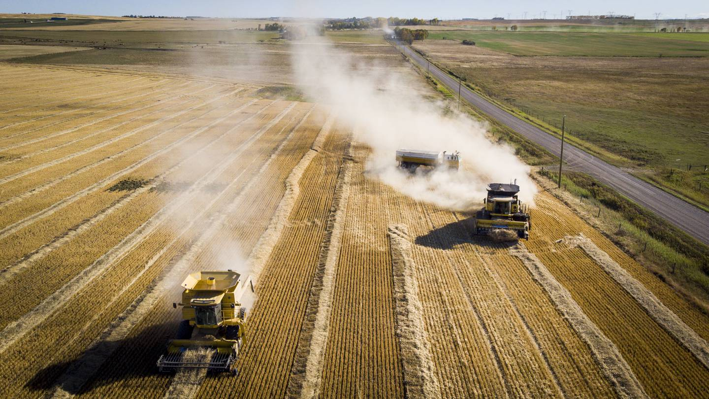 The Reid family harvest their wheat crop near Cremona, Alberta, Sunday, Sept. 27, 2020. Canada is the world's sixth-largest producer and one of the largest exporters of wheat, annually producing an average of over 25 million tonnes and exporting around 15 million tonnes.(Jeff McIntosh/The Canadian Press via AP)