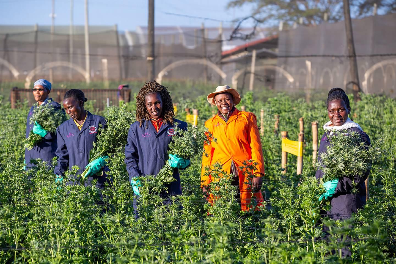 KOM GJENNOM KRISEN: Marginpar eier og driver blomsterfarmer i Kenya og Tanzania og et salgs- og distribusjonsselskap i Nederland. Totalt har de 3.600 ansatte hvorav halvparten er kvinner. Norfund eier 23 prosent av selskapet.