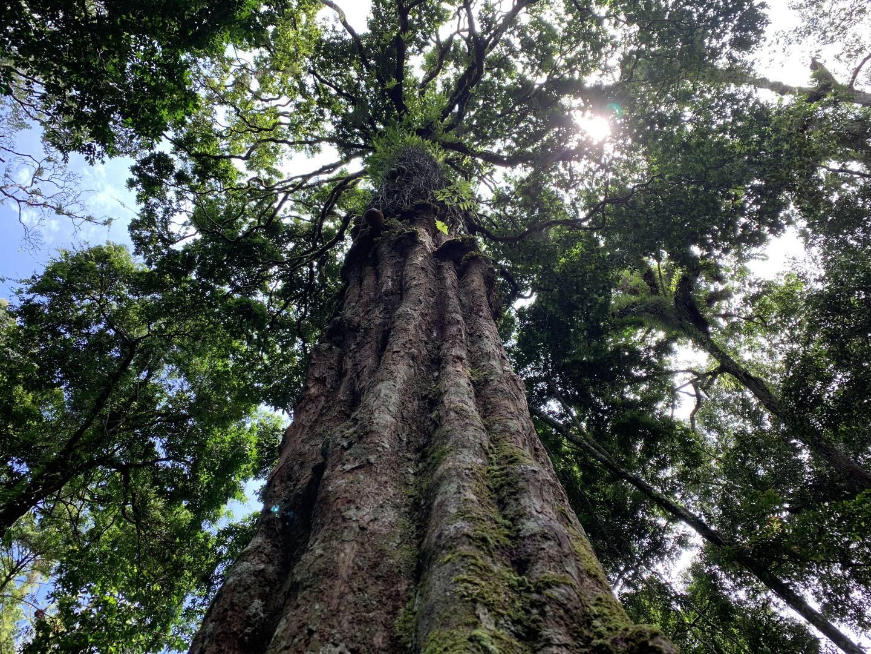 Regnskogen i Gabon tilhører verdens nest største regnskog, Kongobassenget. Ny forskning viser at det er klar sammenheng mellom regnskogen i østlige deler av DR Kongo og nedbør i Etiopias høyland. Det er stor sannsynlighet for at den samme sammenhengen gjelder regnskogen i Gabon og DR Kongo og nedbør i Sahel-området. Norad og det norske klima- og skoginitiativet NICFI støtter regnskogarbeid i Gabon.