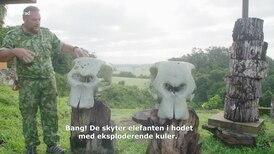 Se Norads filmklipp om Gabons skogelefanter