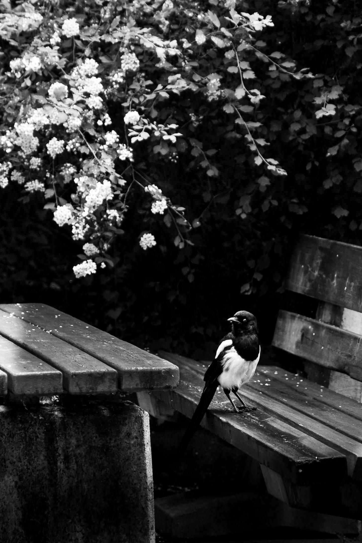Ta Tiden fotoprosjekt av Noah Gylver - publiseres kun med tillatelse!!